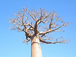 درخت تنها – قصه کودکانه