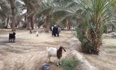 گزارش سفر هیاتی از موسسه جهت بازدید از فعالیتهای یکساله در مناطق محروم جنوب استان کرمان ـ 13 فروردین 1397