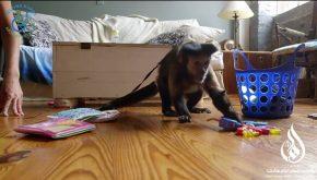 دستیار میمون، یکی از جالب ترین مراکز خیریه دنیا